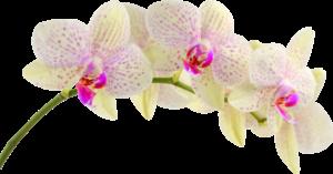 fleur energie du coeur praticienne energéticienne reiki bars acces channeling noellia chami